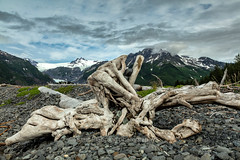 Gift of the Tides (chasingthelight10) Tags: events photography travel landscapes beaches glacialvalley glaciers mountains nature ocean places alaska aialikbay kenaifjordsnationalpark kenaipeninsula otherkeywords inlet driftwood