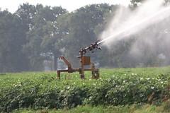 Artificial spraying the  last day  tomorrow !  ???? (excellentzebu1050) Tags: artificial farm fieldwork spraying summer2018 drought crops farmer field coth5 sunrays5