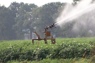 Artificial spraying the  last day  tomorrow !  ????