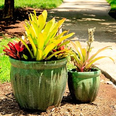 Pots in the sun (LarryJay99 ) Tags: washedashore mountsbotanicalgardens palmbeachcounty litter trash refuse plastics art arts greenery lants plants green pots containergardening succulents leaves colors light
