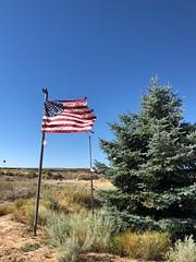 The Highway 50 Christmas tree. (Chuckcars) Tags: fixture landmark spruce tree christmas delta grandjunction highway50 colorado