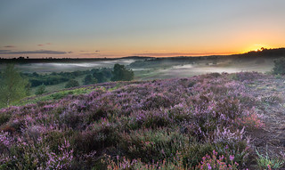 Rockford-Common New Forest National Park