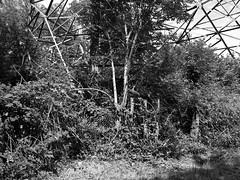 Gestähltes Gestrüpp / Semi-Urban Jungle (bartholmy) Tags: aichwald aichelberg gestrüpp undergrowth zaun fence maschendrahtzaun wiremeshfence hochspannungsmast pylon brambles tree baum busch strauch bush shrubs abstract abstrakt monochrome bw sw overgrowth overgrown überwuchert überwucherung wildwuchs strommast gittermast bawü