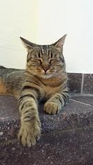 Ausruhen im Schatten (Tatjana_Schmid) Tags: katze cat tiger pet haustier animal stubentiger