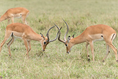_DSC4054.jpg (wim_tavernier) Tags: africa transmara kenya