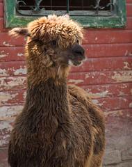 Zoo-Park Arche Noah in Grömitz/Ostsee (Helmut44) Tags: deutschland germany schleswigholstein grömitz ostsee zoo archenoah tierwelt tierporträt animal