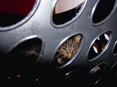 DSC01253 (MykeOwns) Tags: tabbycat tabby cat cats