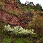 Flowering Plants and Trees Along a Hiking Trail (Wind Cave National Park) thumbnail