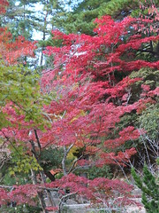a (50) (hiromi89) Tags: japan beauty beautiful scenery flower wood pond