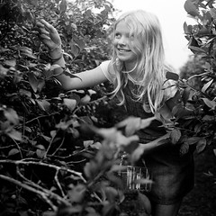 Ella In Caffenol (Geralindo**) Tags: 120 2018119 6x6 basket blonde bracelet caffenol caffenolc denim dress dungarees ella field filmphotography fruit girl hair happy kodaktrix long mediumformat pickyourown picking pretty smiling tlr vegetables vines yashicamat durleigh marsh farm shop
