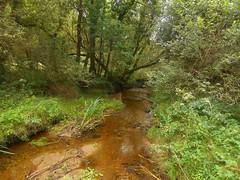 DSCN5645 (norwin_galdiar) Tags: bretagne brittany breizh finistere monts darrée nature landscape paysage