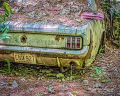 Old Car City 117 (augphoto) Tags: augphotoimagery abandoned auto automobile car decay old weathered white georgia unitedstates
