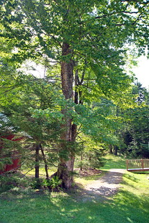 26 Sagamore:  Caretaking Complex - School House Birch