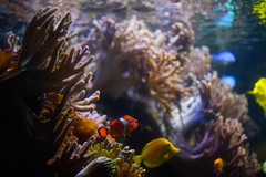National Aquarium (michael_orr25) Tags: baltimore maryland unitedstates us nikond7500 aquarium sealife
