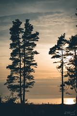 Jurkalne& Kolka 2018 (Raimond Klavins   Artmif.lv) Tags: raimondklavinswwwartmiflv artmiflv klavins raimond wwwartmiflv jurkalne koka kolka latvia