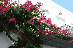 DSC_0075 (JustineChrl) Tags: parikia paros island sunset village landscape beautiful summer holidays greece nikon sky blue white pink flowers house beach
