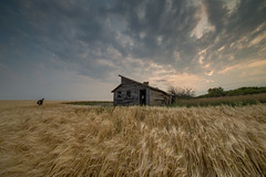 Far Fields (gerrypocha) Tags: prairie canada fields grain barn abandonment summer sky