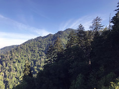 """almost two years after the fire (""""One who sits by the fire"""") Tags: mountains pines pinetrees forest summer summertime smokymountains greatsmokymountainsnationalpark tennessee"""