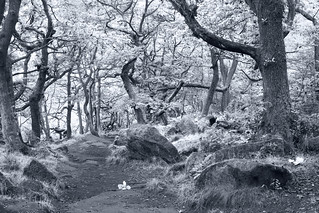 Ancient woodland - 2