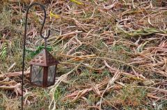 180805 psl 180807 © Théthi (thethi (pls, read my 1st comment, tks a lot)) Tags: sécheresse texture pattern lanterne pelouse herbe feuille arbre sumac climat co2 jardin namur wallonie belgique belgium bestof2018 faves40