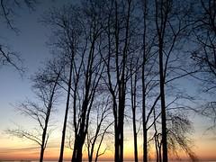 Sunset. (presteza777) Tags: sunset tramonto puestadelsol coucherdusoleil coast trees sun thegulfoffinland закат море деревья sky cielo