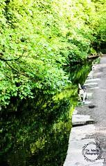 Glamorgan Canal (Elle.Rebecca Photography) Tags: dogs beagle beagles dog walk walkies water ducks uk wales cardiff glamorgan canal glamorgancanal