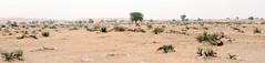 le commencement de ma perdition (bogus18881) Tags: desert nature green tree landscape