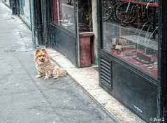 L'attente (Jean S..) Tags: store boutique dog animal street windows waiting