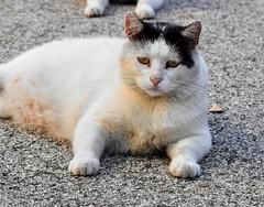 Fanegas #gatos #gatoscallejeros #cats #photocats #instacats #neko #meow #gatze #gatto #koshka #catsofworld #catsofinstagram #streetcats #chat #eyes #eyelicious (Carolina_BCN) Tags: gatos gatoscallejeros cats photocats instacats neko meow gatze gatto koshka catsofworld catsofinstagram streetcats chat eyes eyelicious