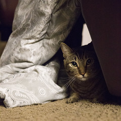 (getsomejelly) Tags: tabby cat brown chair pillow carpet bokeh shallow depth field 11 square crop format triangle