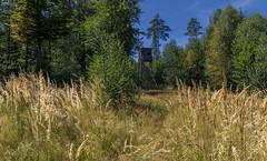 Reed grass with high seat (KF-Photo) Tags: ansitz hochsitz jägersitz näheteich querfeldein schönbuch schilfgräser