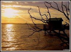 Coucher de soleil sur l'estuaire de la Gironde. (Les photos de LN) Tags: sunset coucherdesoleil estuairedelagironde aquitaine sudouest nature paysage carrelet pêcheurs cabane filet lumière reflet arbremort eau ciel nuages