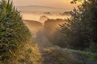 *dream path* - *Traumpfad*