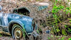 Old Car City 116 (augphoto) Tags: augphotoimagery abandoned auto automobile car decay old weathered white georgia unitedstates