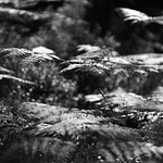 Black Woods of Rannoch 5 thumbnail