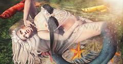 Metamorphosis (Sugarfairy88 Resident) Tags: mermaidcove vanillabae argrace amarabeauty anc ks michan secondlife sl secondlifefashion slfashion sexy slfantasy fashion fantasy mermaid digitalart 3dart