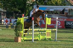 A9908541_s (AndiP66) Tags: springen langenthal 2018 5august2018 august pferd horse schweiz switzerland kantonbern cantonberne concours wettbewerb horsejumping equestrian sports springreiten pferdespringen pferdesport sport sony alpha sonyalpha 99markii 99ii 99m2 a99ii ilca99m2 slta99ii sony70400mm f456 sony70400mmf456gssmii sal70400g2 amount andreaspeters
