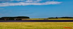 Lavender (red.richard) Tags: barley lavender gold purple aberdeen landscape scotland sky