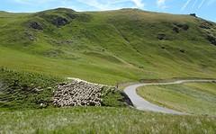 dans le col de Restefond (b.four) Tags: montagne montagna mountain mouton sheep pecora restefond campdesfourches hautetinée alpesmaritimes coth coth5