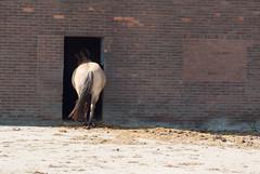 Hot bum (j.elemans) Tags: horse hot bum tail poem shade sunshine summer manure stable paard stal staart warm zomer gedicht mest littledoglaughedstories