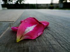 petali (enzo 74) Tags: petali colori delicatezza natura fiori