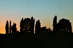 (Domenico Busco) Tags: film 35mm kodak color apulia puglia sunset tree nature colorplus plus nikon nikkor 70mm f3 3 summer