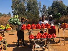 Roadside Tomato Stand (The Advocacy Project) Tags: africa zimbabwe makonidistrict manicalandprovince fieldvisit kale tomatos vegetables produce smile sun red green gold
