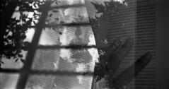 Des feuilles dans les mots (Rachelnazou) Tags: caffenol ilford film blackwhite analog argentique minolta