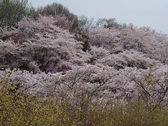 a (22) (hiromi89) Tags: japan beauty beautiful scenery flower wood pond