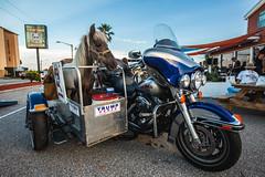 Horse on a Hog (3rd-Rate Photography) Tags: minihorse horse harleydavidson motorcycle animal ultraclassic sidecar tipstaco funny cute canon 1635mm ormondbeach florida 3rdratephotography earlware 365