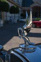 Concours d'Élégance Paleis Het Loo 2018 (Okke Groot - in tekst en beeld) Tags: details packarddualcowlsportphaeton radiateurmascottes apeldoorn nederland concoursdélégancepaleishetloo2018