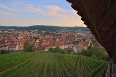 Esslingen (Notquiteahuman1) Tags: esslingen germany badenwürttemberg vineyards plants wideangle landscape townhouse rows stairs landsape raw nef town city sigma sky clouds day symmetry south country urban oldtown historic roof sigma1735mm2840hsm nikond610