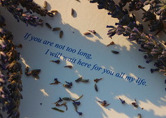 213/365 If you are not too long, I will wait here for you all my life. (Helen Orozco) Tags: 213365 quote oscarwilde 2018365 lavender font 2018 forolivieraug41978tojune22018 rip