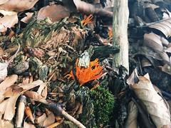 W lesie (basiamarcisz) Tags: leaves liście las forest